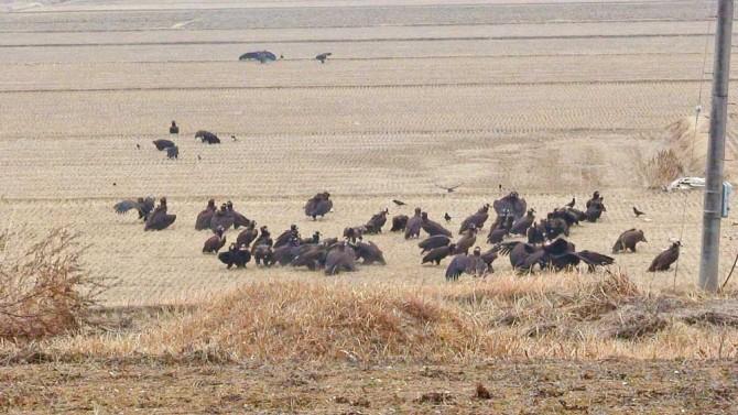 2012년 2월 경남 고성 독수리 포획 지점에서 촬영한 사진. 한국환경생태연구소는 멸종위기종인 독수리의 생태 파악을 위한 위치추적도 진행하고 있다. - 한국환경생태연구소 제공